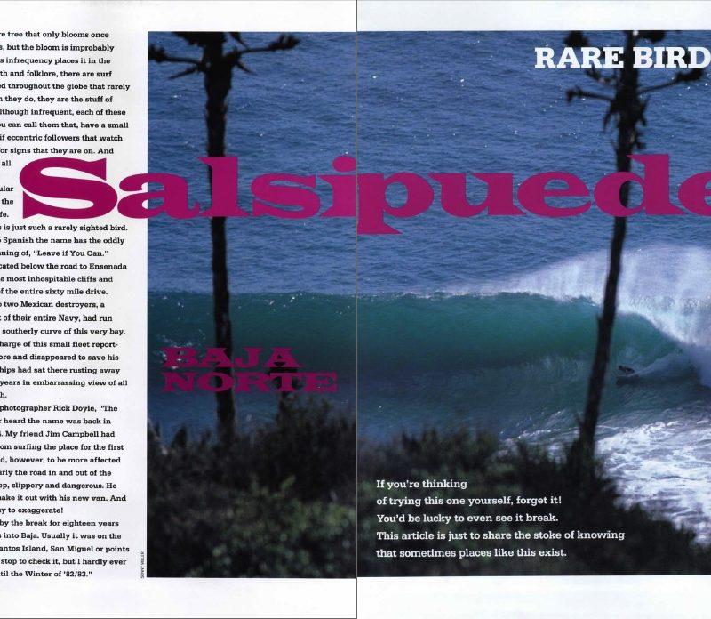 Rare Birds: Salsipuedes